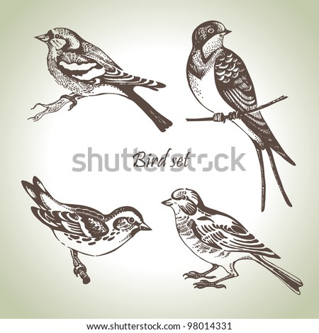 Bird set, hand-drawn illustration - stock vector