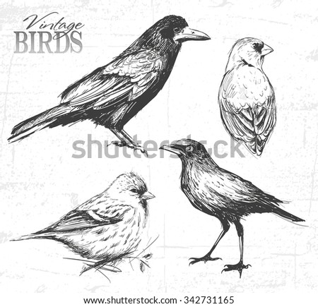 Bird set, hand-drawn illustration. See also other animals - stock vector