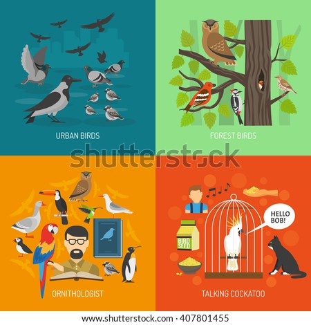 Bird 2x2 images concept presenting urban and forest bird ornithologist and talking cockatoo flat vector illustration  - stock vector