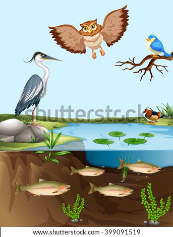 Birds and fish by the pond illustration - stock vector