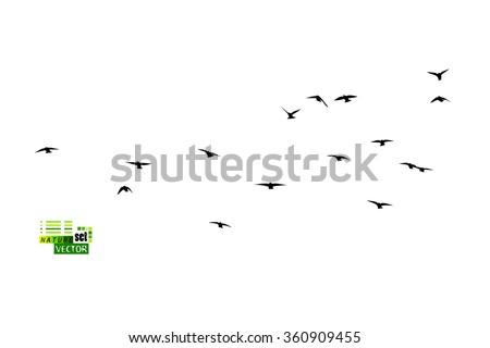Birds flock of starlings. Vector - stock vector