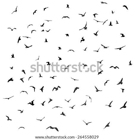 Birds, gulls, black silhouette on white background. Vector - stock vector