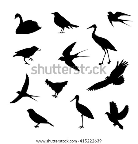 birds of different icons on white background,vector illustration