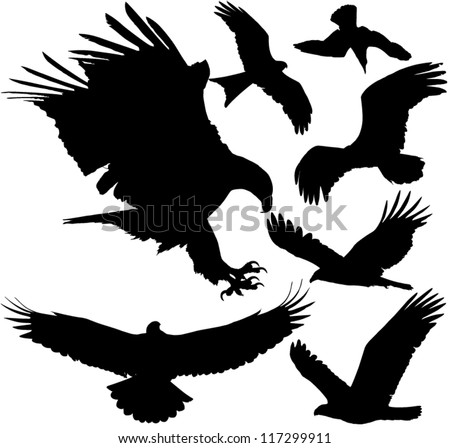 Birds of prey (eagle, hawk, falcon, griffon vulture etc.) vector silhouettes on white background. Layered. Fully editable - stock vector
