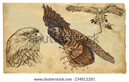 BIRDS OF PREY (Raptors). Collection of an hand drawn illustrations (originals, no tracing). Drawings are editable in layers and groups. The color layers are separated.