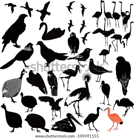 birds on a white background, isolated vector - stock vector