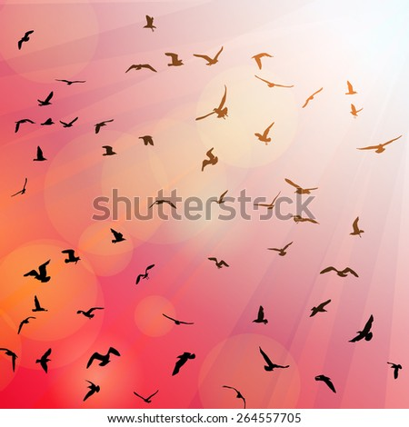 Birds, seagulls black silhouette on pink background, sunset, dawn. Vector - stock vector