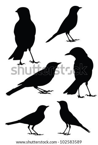 Birds Silhouette - 6 different vector illustrations - stock vector