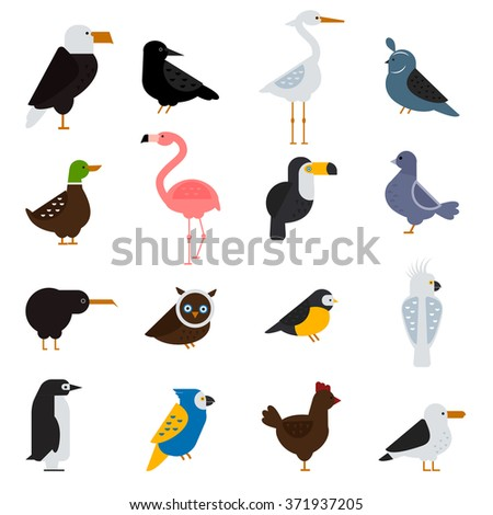 Birds vector set. Birds illustration. Eagle, parrot. Pigeon and toucan. Bird collection. Penguins flamingos. Crows and peacocks. Black grouse, chicken. Heron