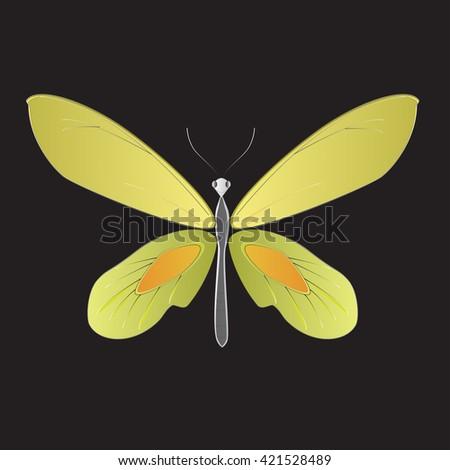 Birdwings Butterfly, Vector illustration. - stock vector