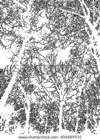 Black and white background texture with trees
