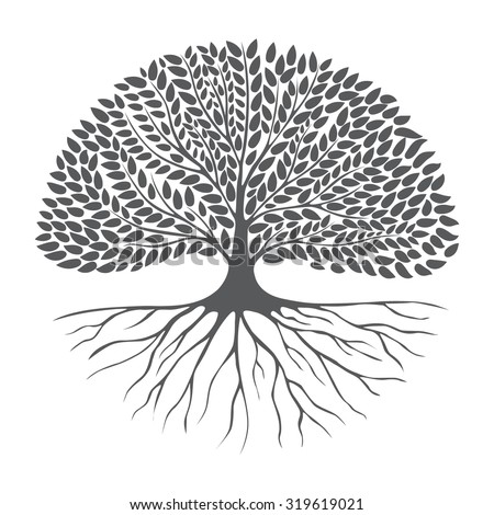 Black and white drawing of deciduous tree. Black silhouette on a white background. Large krone root system. Isolated. Vector Image. - stock vector