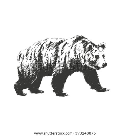 black and white engrave isolated vector bear. See also other animals. - stock vector
