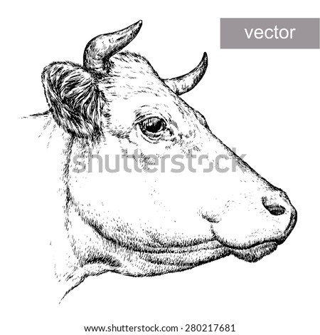 black and white engrave isolated vector cow - stock vector