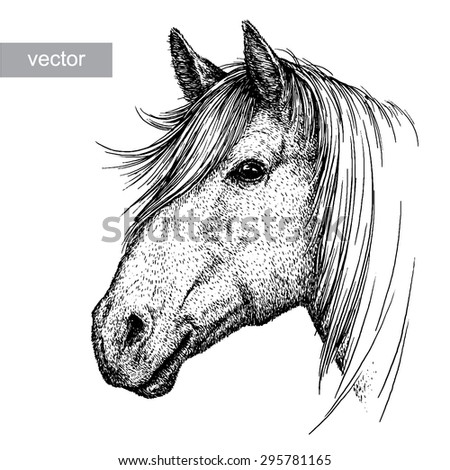 black and white engrave isolated vector horse head