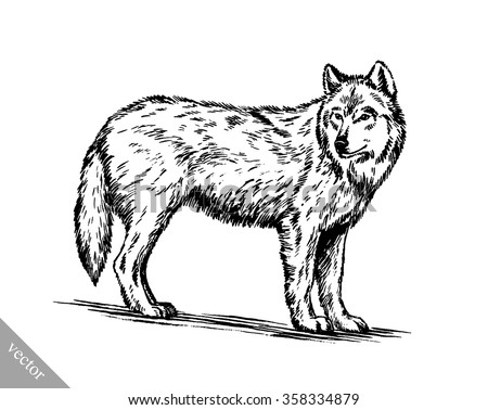 black and white engraved isolated wolf - stock vector