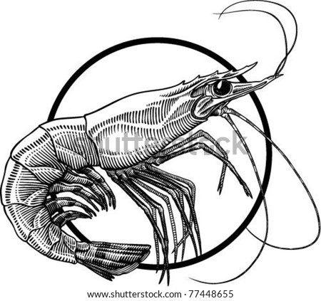 Black and white engraving illustration of shrimp. Circle frame can be easily removed - stock vector