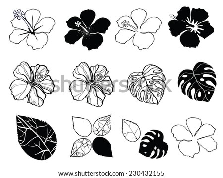 Black and white flowers of hibiscus - stock vector