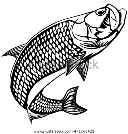 Tarpon Stock Images, Royalty-Free Images & Vectors ...