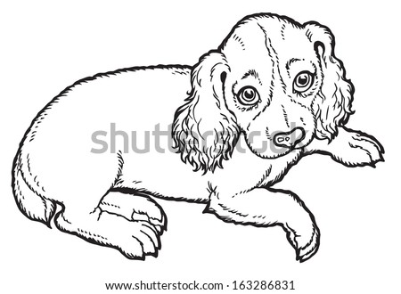 Black and white dog drawing - photo#42
