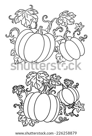 Black and white line drawings of pumpkins growing on trailing vines with leaves for halloween design, vector illustration isolated on white - stock vector
