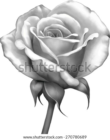Black and white Rose bud Flower isolated on white background - stock vector