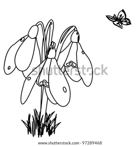 black and white snowdrop flowers - stock vector