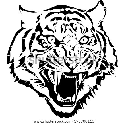Black and white tiger head vector by illustrator.I draw from my sketch pic. - stock vector