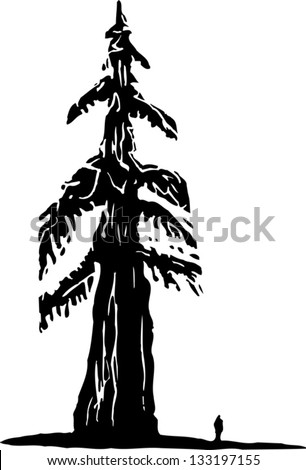 Black and white vector illustration of redwood tree