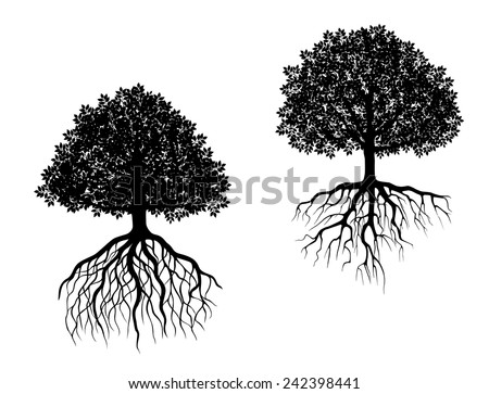 Black and white vector trees showing different root systems with intricate fibrous roots and differently shaped leafy canopies - stock vector
