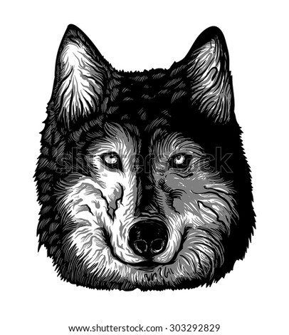 Black and White Wolf Head - stock vector
