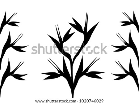black  Bird of Paradise flowers on a white background uses for card or invitation