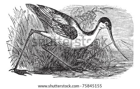 Morphart Creations Vintage Birds set on Shutterstock