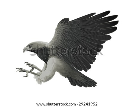 Black chested Eagle buzzard attacking! - stock vector