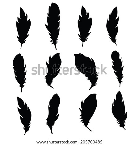 Black feathers. Vector. - stock vector