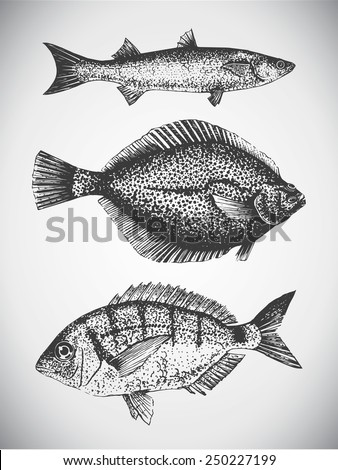 black ink hand draw illustration of fishes flounder and mullet - stock vector