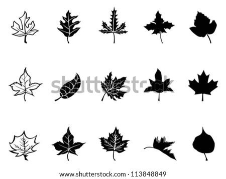 Black Maple leaves silhouette - stock vector