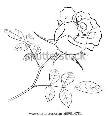 Black Outline Rose Flower Stem Two Stock Vector 609514751 ...