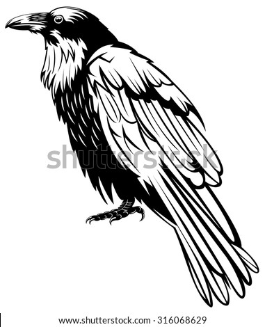 Black raven bird, hand-drawing. - stock vector