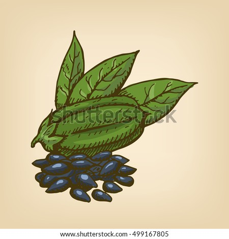 Black Sesame Seeds with pod and leaves. Vector illustration. Hand drawn illustration.