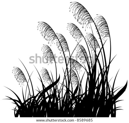 Black silhouette of a grass on a white background - stock vector
