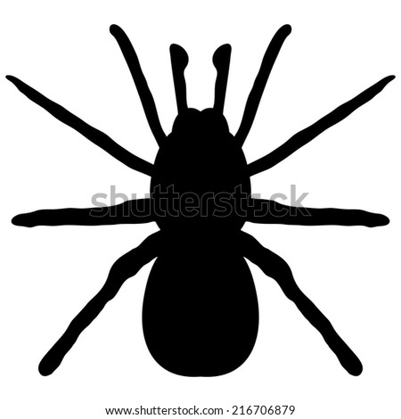 black silhouette of a spider on a white background - stock vector