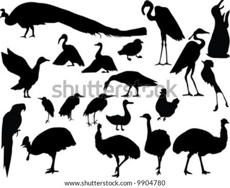 black silhouette of bird on white background