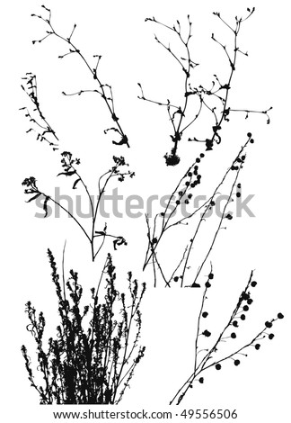 black silhouettes of wild plants on a white background.