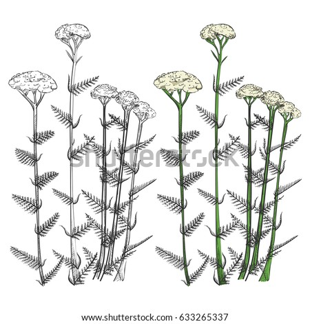 Black spring flowers silhouettes colorful sample stock vector black spring flowers silhouettes and colorful sample isolated on white background drawing flower vector illustration mightylinksfo