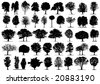 Black tree silhouettes on white background. Vector illustration. - stock vector