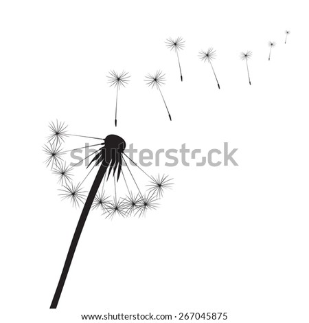 Black vector dandelion - stock vector