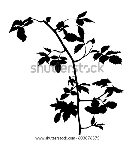branch with leaves stock images royaltyfree images