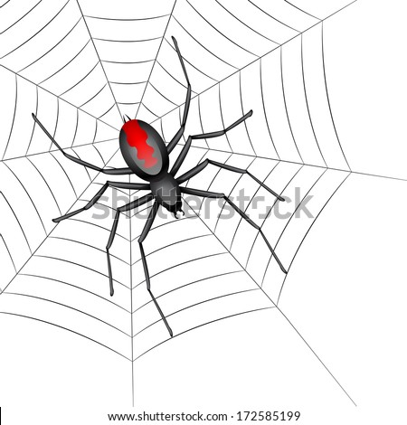 Black Widow Spider in a Web on a white background. - stock vector
