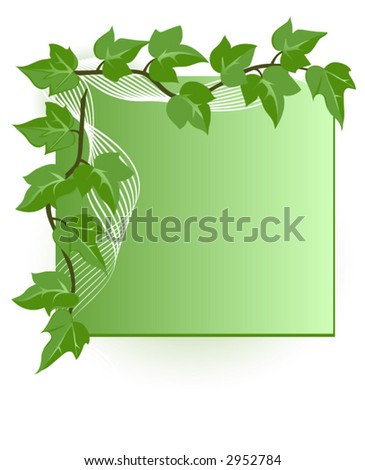 Blank card with green ivy leaves, vector illustration. - stock vector